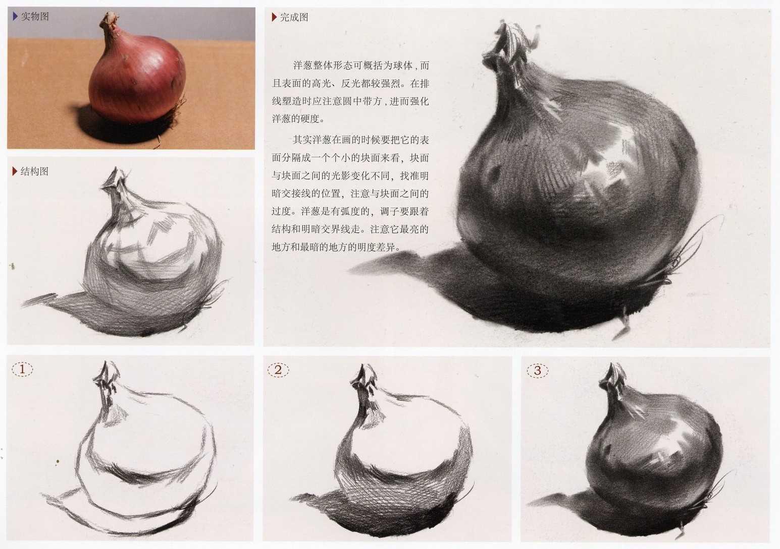 素描静物洋葱实体图和素描步骤