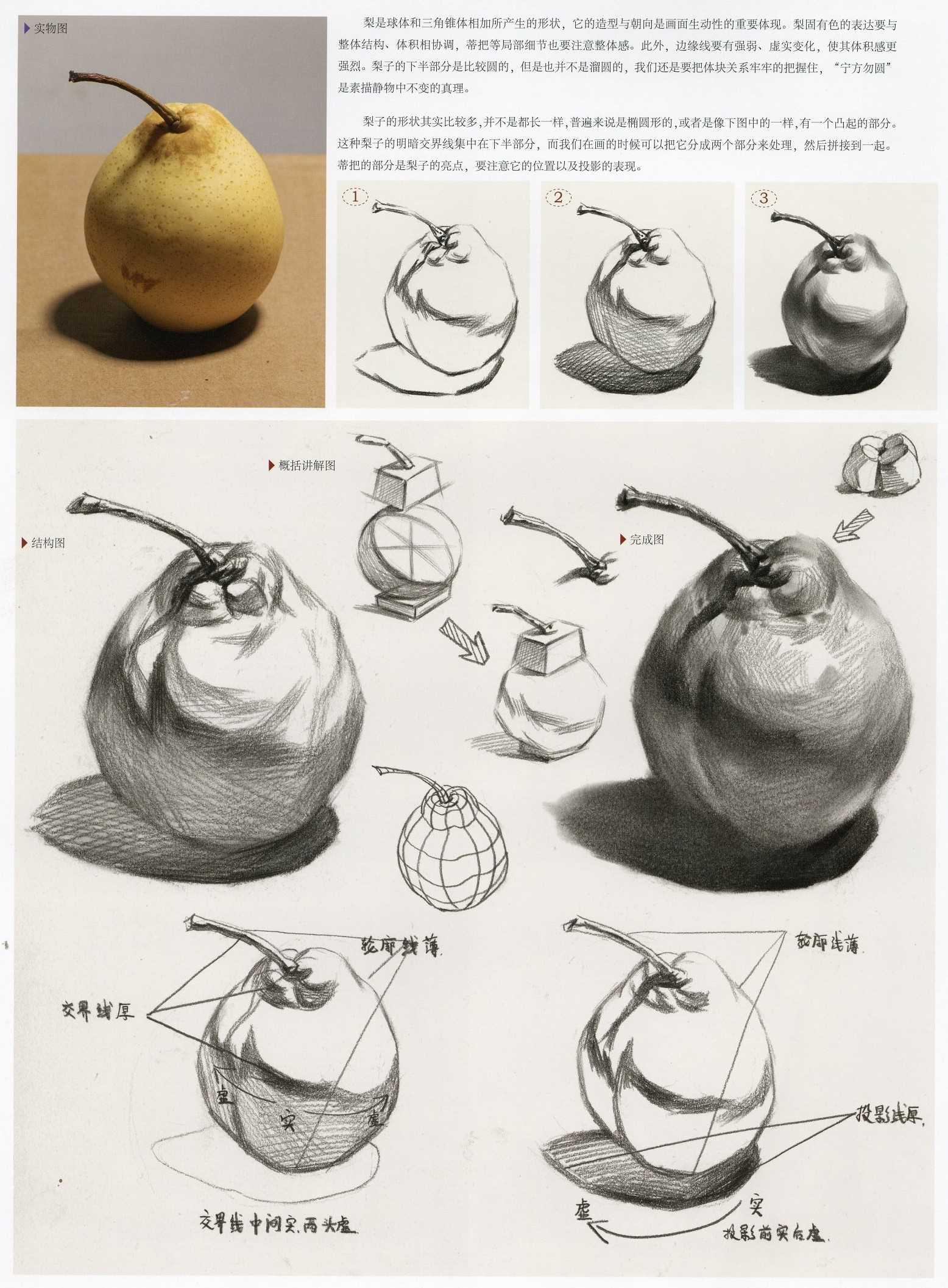 素描梨实体图,素描梨结构步骤教程分析
