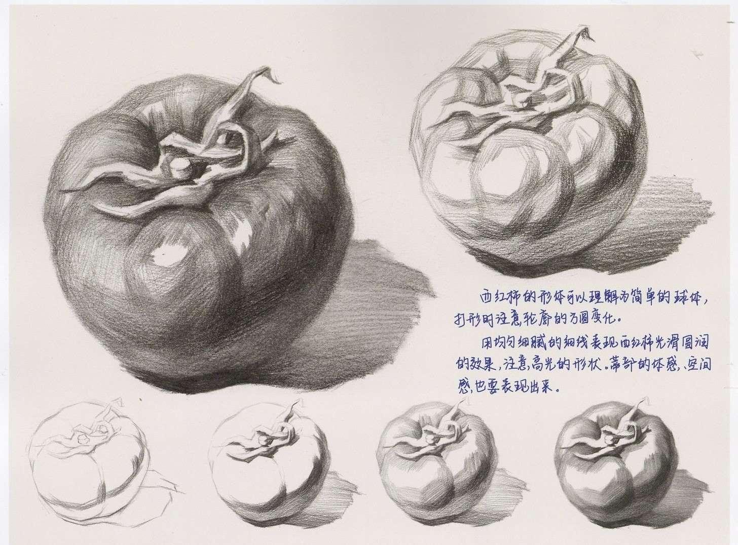 素描蔬菜西红柿和茄子的步骤画法教程