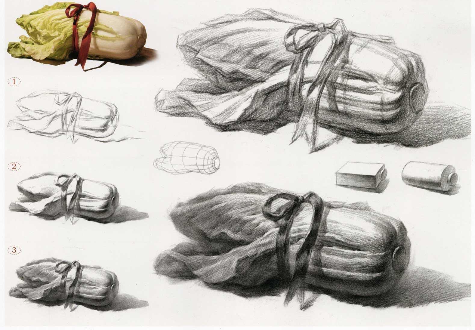 绘画素描捆绑的大白菜 结构分析
