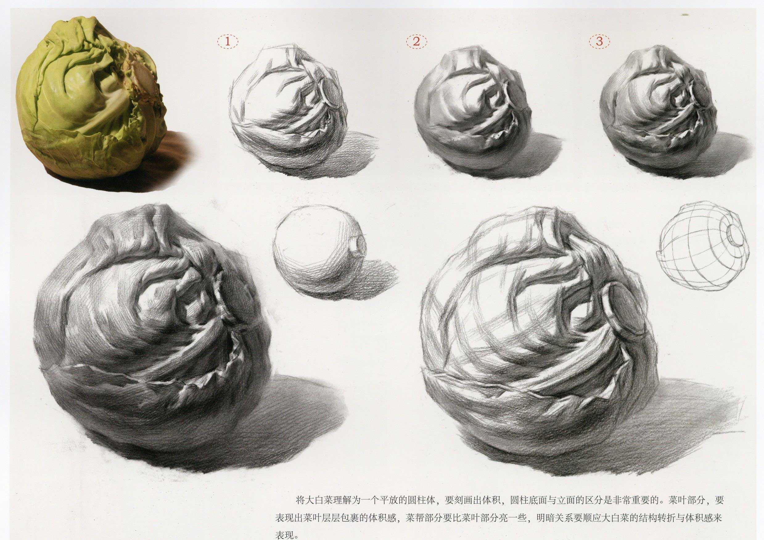 素描圆形大白菜 圆心菜 步骤教程