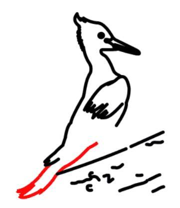教你简单快速画一只啄木鸟